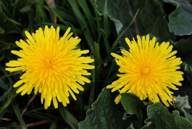 노란색 아름 다운 꽃의 근접 촬영보기