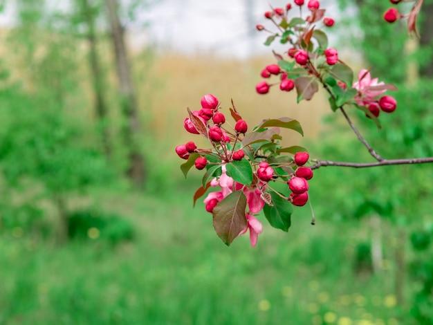 枝、選択的な焦点、緑の背景に美しい明るいピンクの桜の花のクローズアップビュー