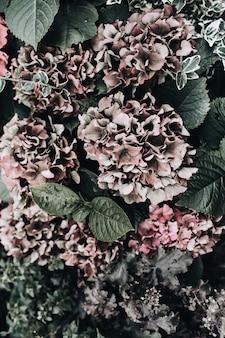 あじさいの花のクローズアップビュー