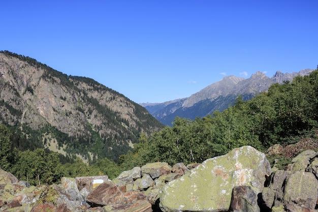 国立公園ドンベイ、コーカサス、ロシア、ヨーロッパの山のシーンのクローズアップビュー。劇的な青い空と晴れた夏の風景