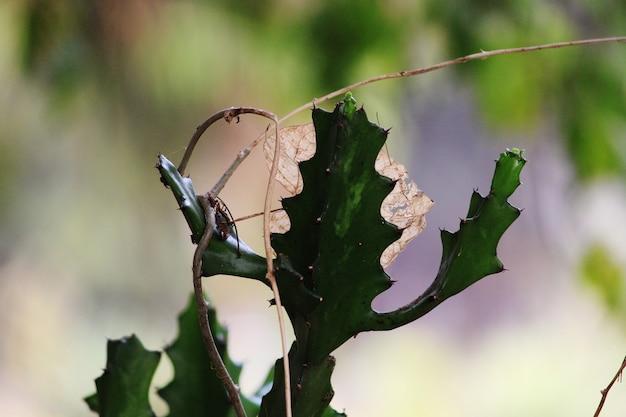 Prickly pear cactus 식물의 근접 촬영 보기