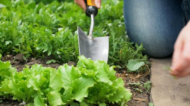 庭の土を掘るスペードを持つ女性のクローズアップビュー。