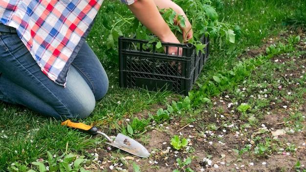 庭に野菜を植えている若い女性のクローズアップビュー。