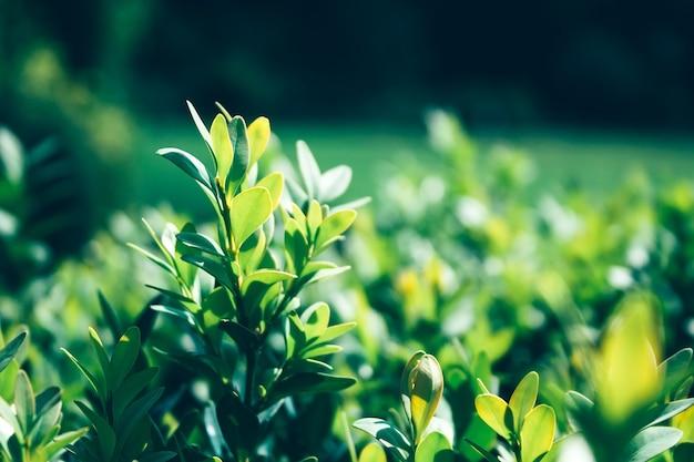 흐린 배경 햇빛에 녹색 부시의 성장 된 부드러운 나뭇 가지에 근접 촬영보기. 선택적 초점. 따뜻한 여름 또는 봄날의 요정 숲