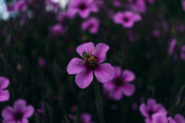 Closeup view of a purple flower with a bee on it in a meadow