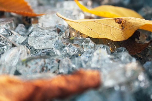 Closeup view of shattered glass fragments among dry leaves selective focus macro shards