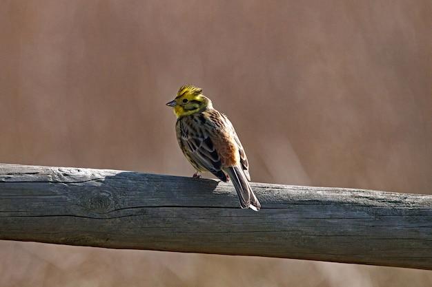 Vista ingrandita di un piccolo uccello arroccato su legno essiccato