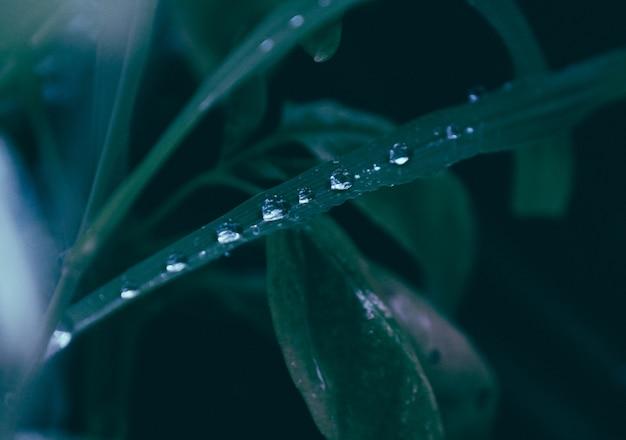 Primo piano delle gocce dell'acqua su una pianta
