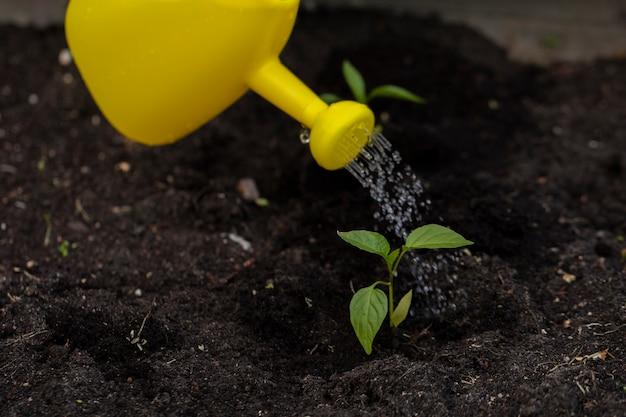 黄色の水まき缶から庭の土に小さな新鮮な若い植物に水をまくクローズアップ