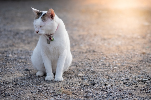 Closeup white  cute cat sitting on rock floor and close eyes with orange sunlight