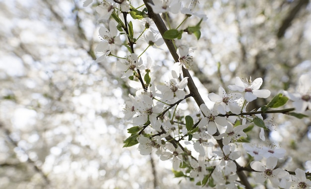 Closeup of a white flower tree with a blurred natural