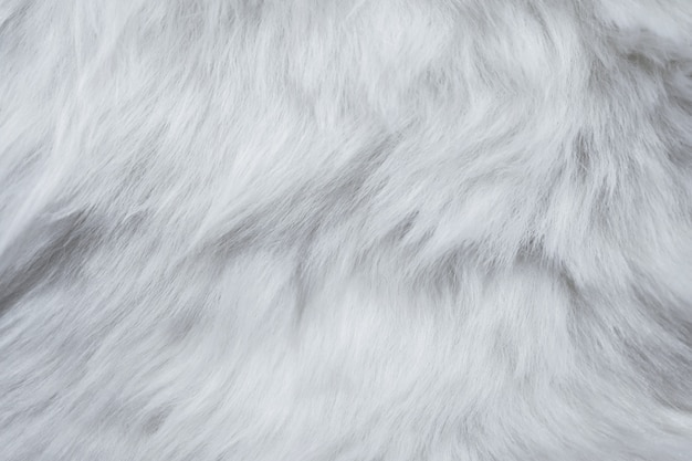 Closeup of white fur texture