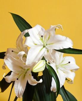 Closeup of white lily