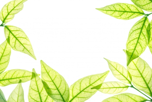 Closeup white space at the center of frame by fresh green leaves isolated on white