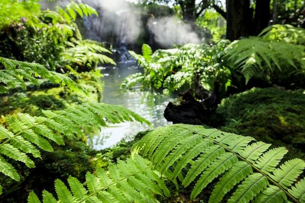 Крупным планом дикие зеленые листья папоротника на фоне природы тропического водопада