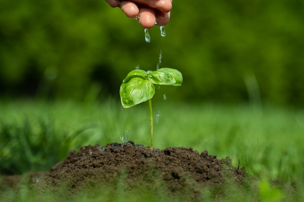 Крупным планом женщина рука поливает молодые растения на плодородной почве