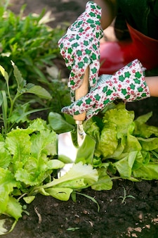 新鮮な有機レタスのベッドの庭で働くクローズ アップ女性