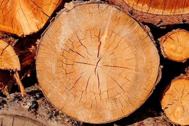 Closeup wood slice cross logs tree section yellow brown