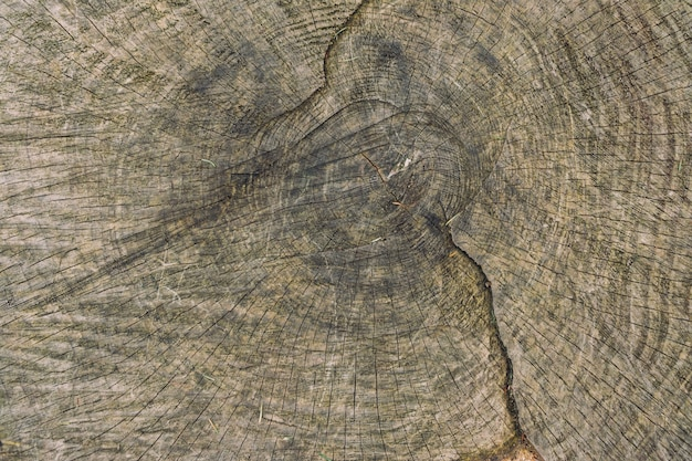 Крупным планом деревянная текстура дерева