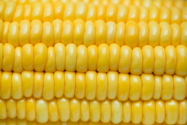 Closeup of yellow corn textured background