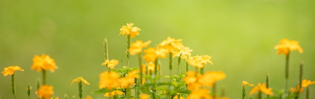 Closeup of yellow flower on blurred green surface under sunlight with copy space