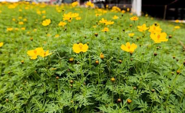 Closeup yellow flowers