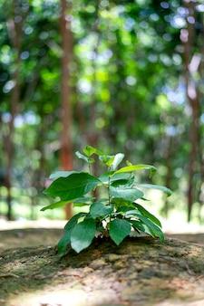 Closeup young green plant growing