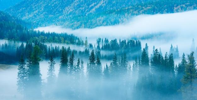 雲に覆われた山林