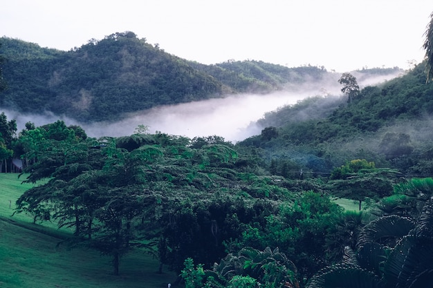 Clouds covering beautiful valleys suan phueng mountain in rainy season, thailand