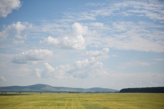 Облака на голубом небе и желтом поле пшеницы