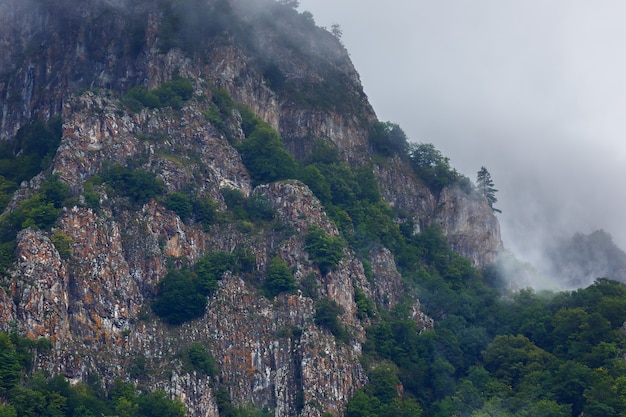 木々が生い茂る岩山の頂上に雲が
