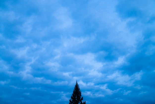 Cloudy blue twilight sky close-up. overcast weather. dramatic sky from many rainy clouds. lonely tree in bottom and center of shot.