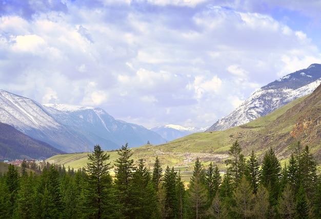 알타이 산맥의 흐린 풍경 키 큰 가문비나무와 슬로프의 마른 풀