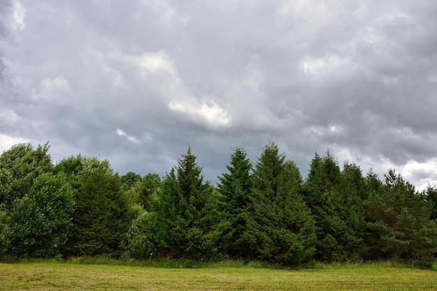 Cloudy sky, fir forest, cloudy day in the forest