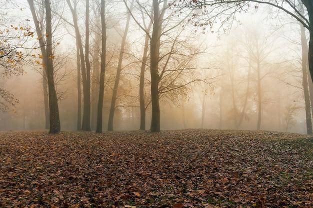 Пасмурная погода в парке в осенний сезон, настоящая осень