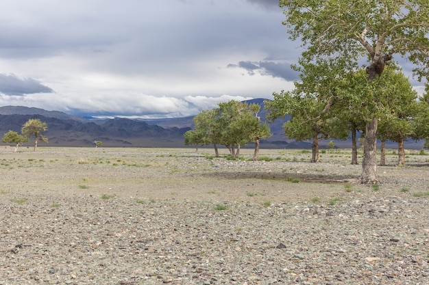 Cloudy weather. trees grow in the rocky soil of the mongolian mountains