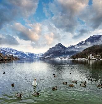Пасмурная зима. вид на высокогорное озеро grundlsee (австрия) с дикими утками и лебедем на воде.