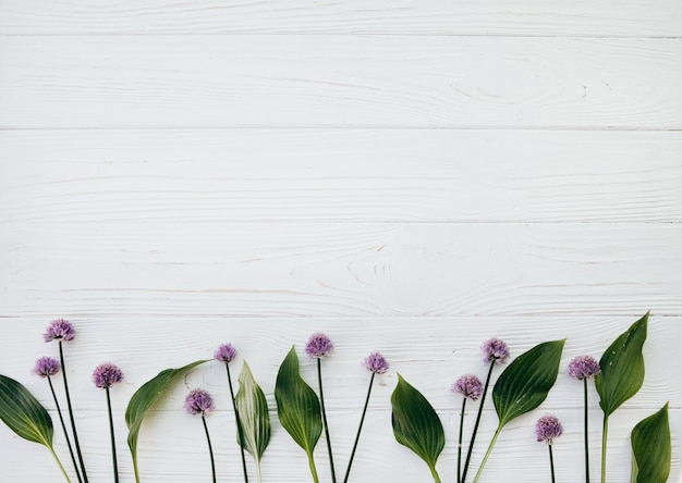 Clover flowers on a white table , summer concept