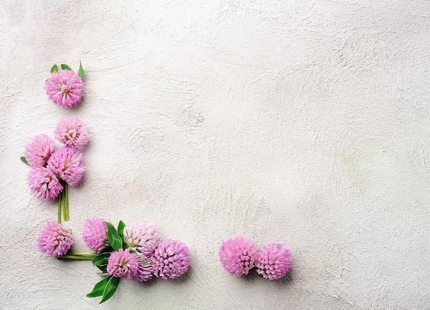 Цветы клевера. фоны.