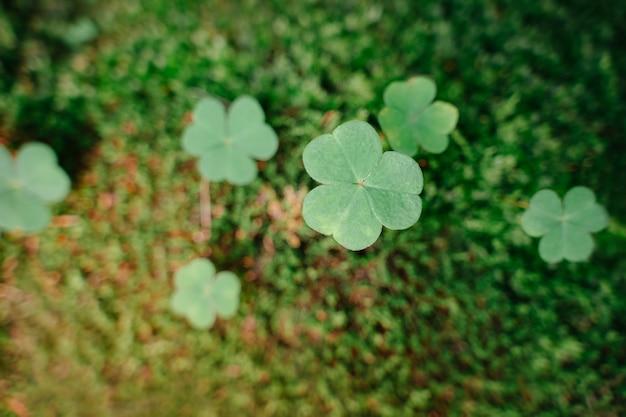 숲 성 패트릭의 날 개념 근접 촬영 복사 공간에서 클로버 녹색 이끼 배경