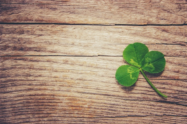 Clover leaf. happy st. patrick's day. selective focus.
