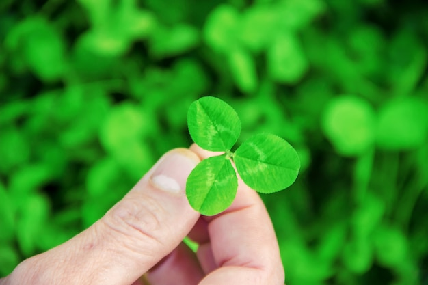 Clover leaf. happy st. patrick's day.