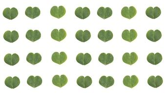Clover leave pattern heart shape