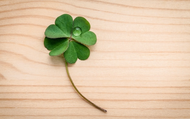 Clovers leaves on wooden background.