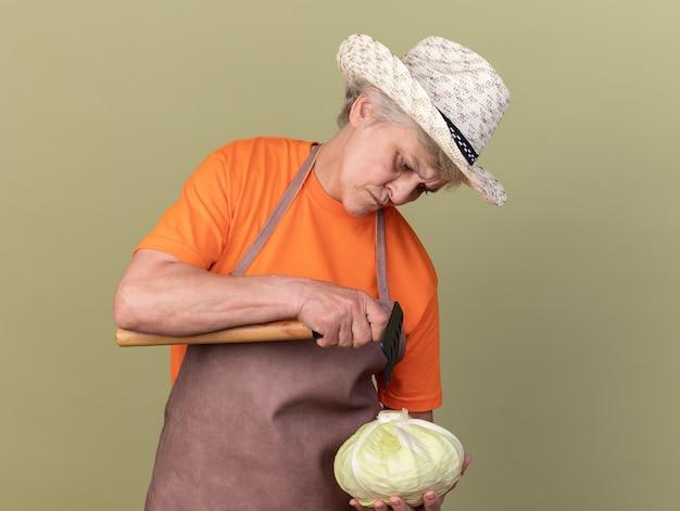 Giardiniere femmina anziana senza indizi che indossa cappello da giardinaggio che tiene rastrello e guarda cavolo isolato su parete verde oliva con spazio di copia