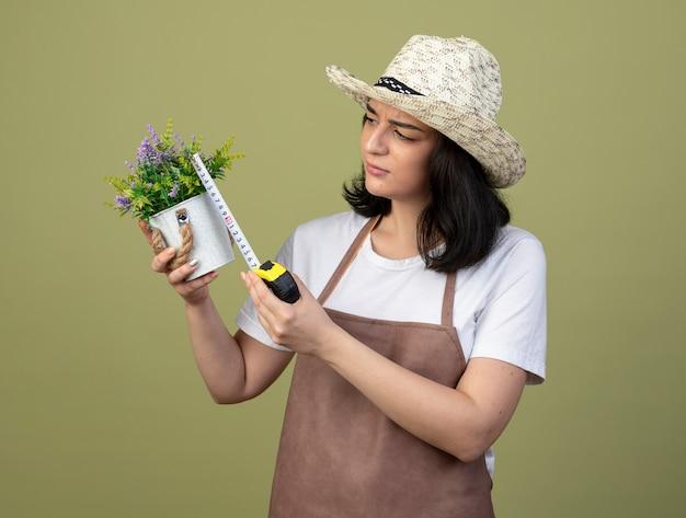 Giardiniere femminile giovane brunetta all'oscuro in cappello da giardinaggio d'uso uniforme che misura vaso di fiori con la misura di nastro isolata sulla parete verde oliva