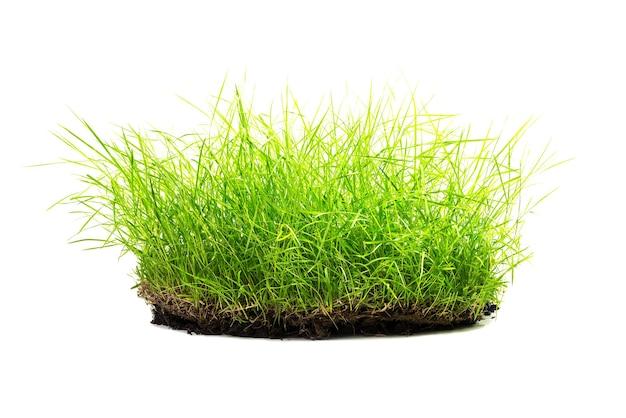 白い背景で隔離の汚れと草の塊