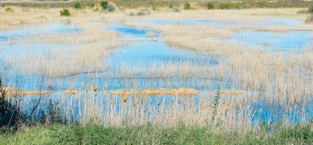 背景に山々と青い水と明るい青い空とコニストン湖の葦のクラスター。