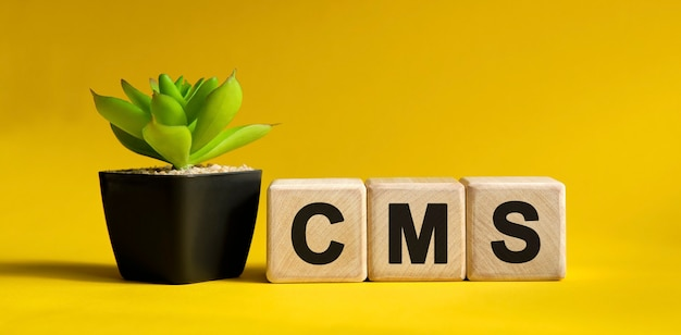 Cms text on a yellow surface. wooden cubes and flower in a pot.