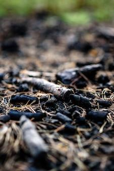 Угли от пожара в лесу.